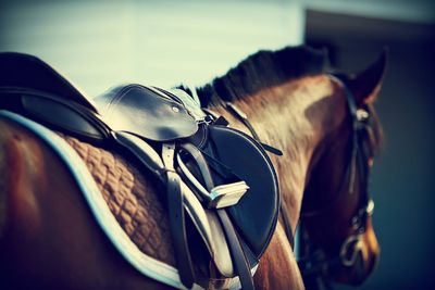 Be Front And Centre At The Melbourne Cup